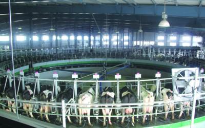 现代养殖场图片